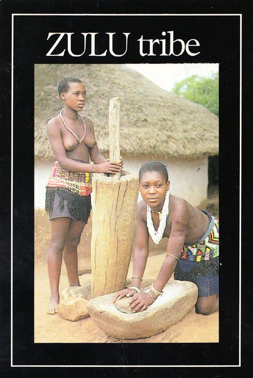 Zulu Tribe Hut Maidens Farm Farming Grazing Maize Africa African Tribal Postcard